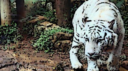 伊豆アニマルキングダム【アニキン名物】動物勝負とは!? あのホワイトタイガーが間近で見られる?