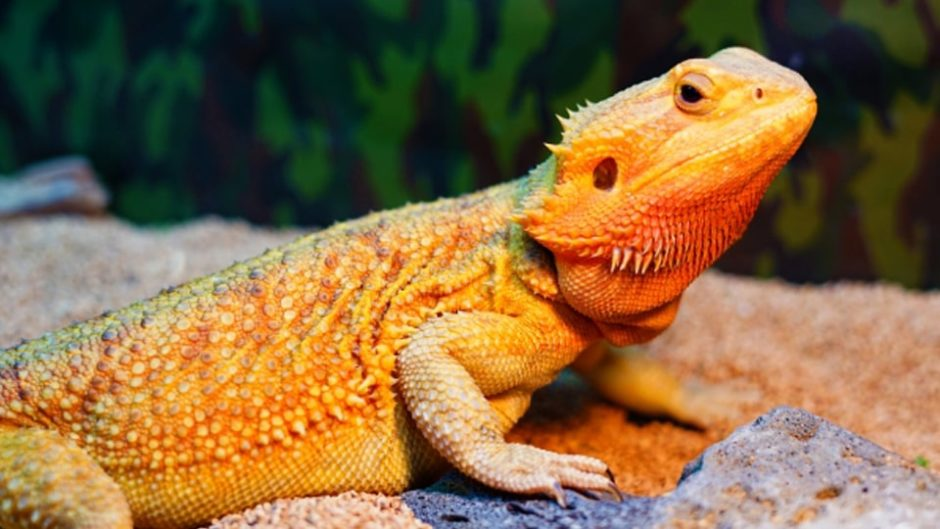 世界の爬虫類に会いに行こう!『ナゴヤレプタイルズワールド2019』が開催