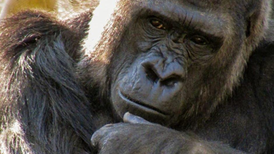 『第69回 東山動植物園秋まつり』が開催♪親子で秋の動植物を楽しんじゃおう!