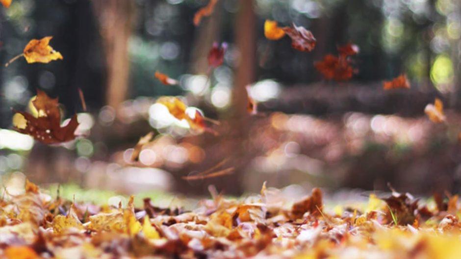 春も大好評だった「韋駄天まつり」が秋にも開催!