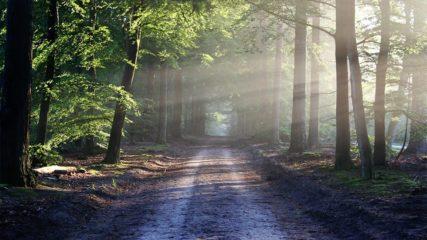 伊豆のジオを学ぶ!美しい自然が広がる『石廊崎オーシャンパーク』に出かけよう!