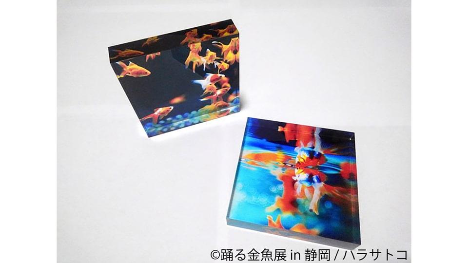 踊る金魚展 in 静岡