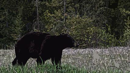 奥飛騨クマ牧場の入場料やアクセスは?かわいいクマがいっぱいの人気スポット