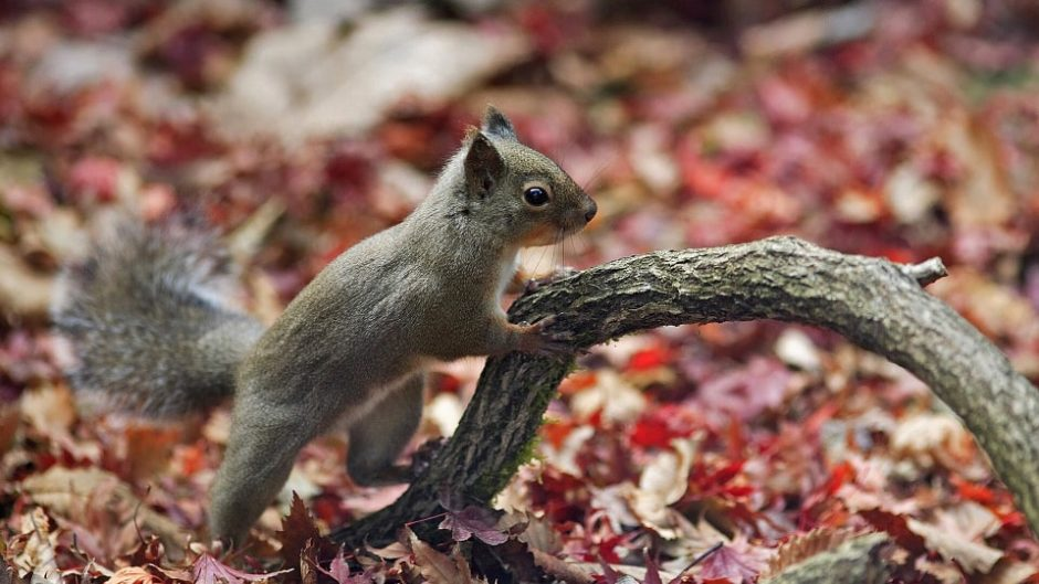 アクティ森で「びっ栗づくしの3日間」開催!栗のつかみ取りや栗染め体験で秋を堪能♪
