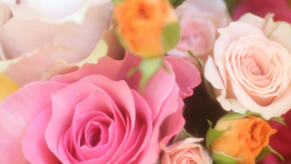 濃厚な香りに包まれる幸せ♡『秋のバラまつり2019』が花フェスタ記念公園で開催
