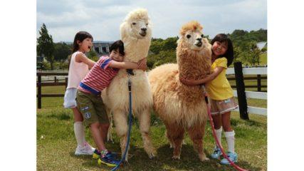 ひるがの高原で動物たちと遊ぼう!『牧歌の里』の施設情報をご紹介!