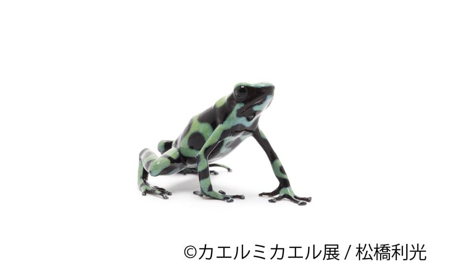 カエルミカエル展in名古屋