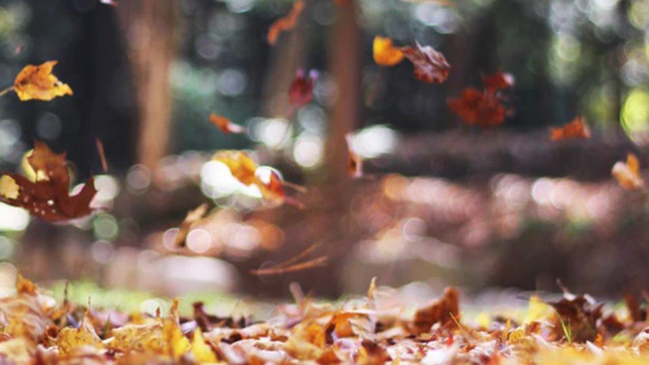 『第8回 豊門公園もみじまつり』が駿東郡小山町で開催!登録有形文化財のある公園でまったりしっとりもみじ鑑賞♪