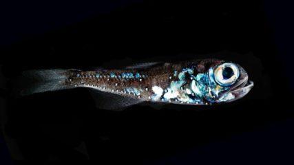 深海って面白い!沼津港深海水族館 シーラカンス・ミュージアムに行こう!