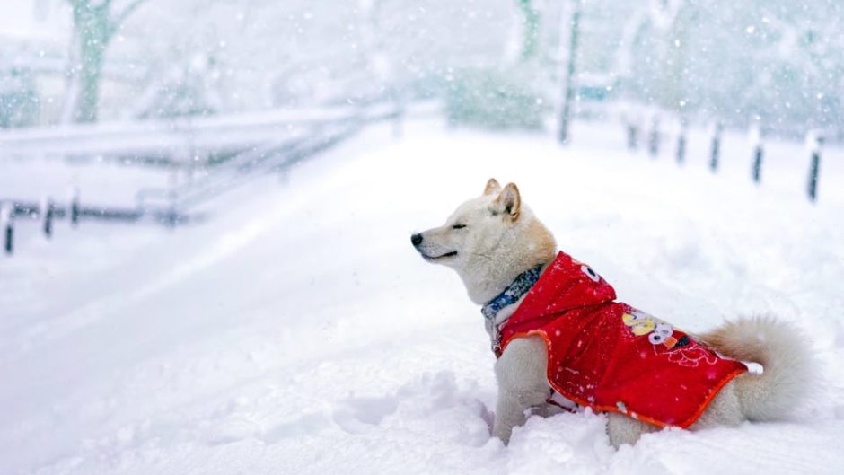 初めての雪遊びにオススメ!! 小さなお子様も安心 の「雪の丘」 オープン。