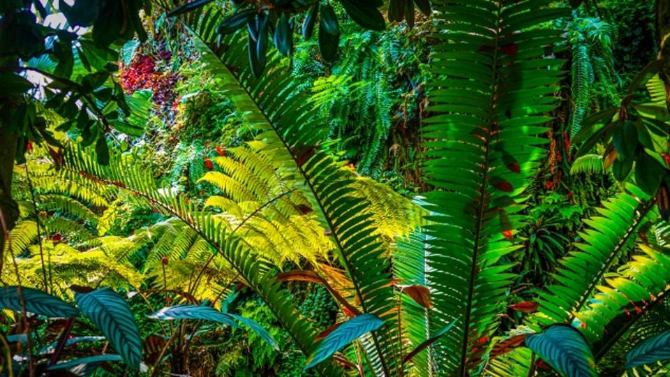 ブラジル・パンタナール大湿原 アマゾンを超える水の楽園 ~第2章 残された森~