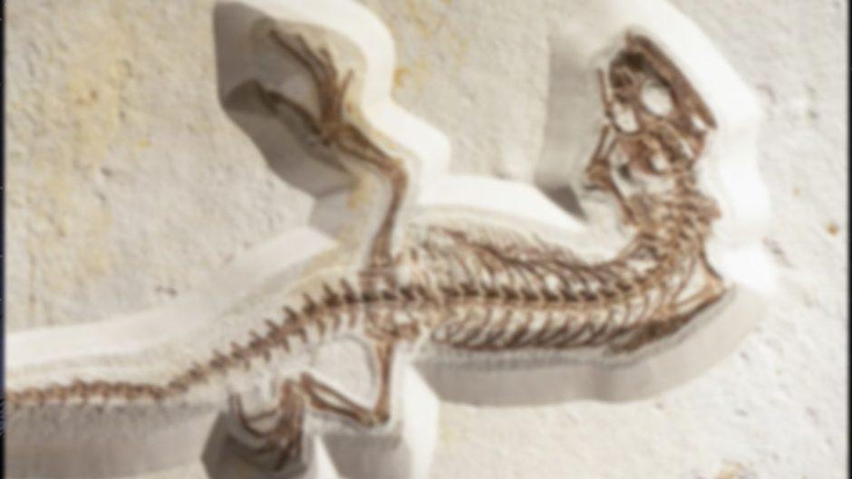 企画展『大絶滅 地球環境の変遷と生物の栄枯盛衰』が「ふじのくに地球環境史ミュージアム」で開催!