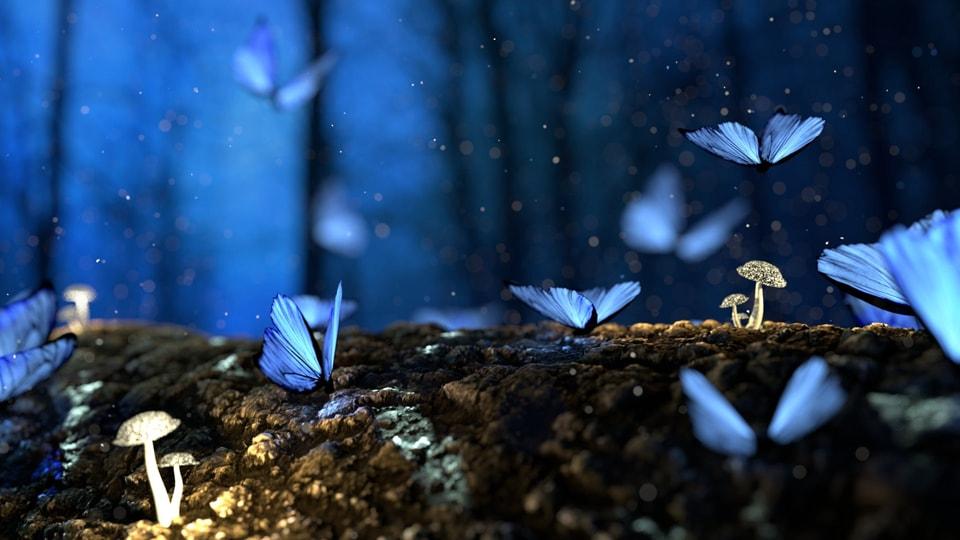星降る森の魔法市