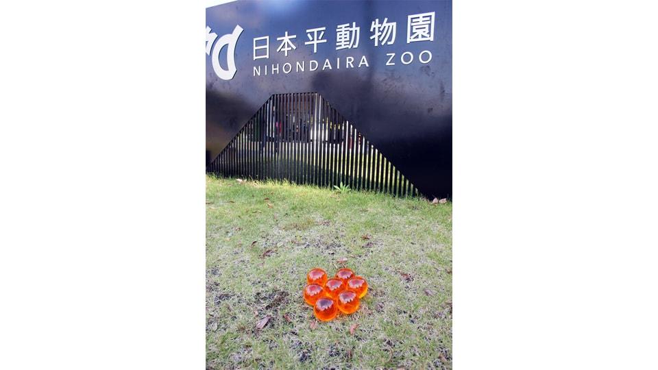 日本平超動物園