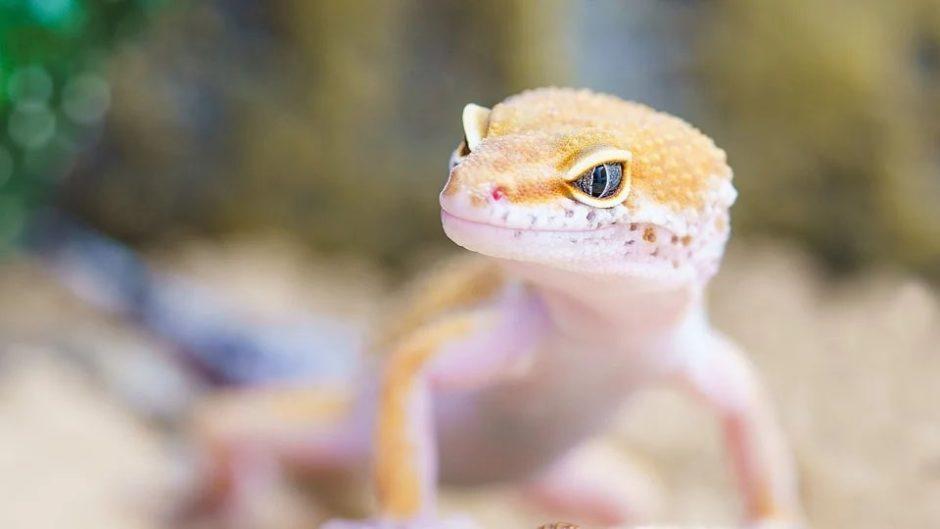 ツインメッセ静岡に爬虫類が大集結!「ジャパンレプタイルズショー2020 Winter」
