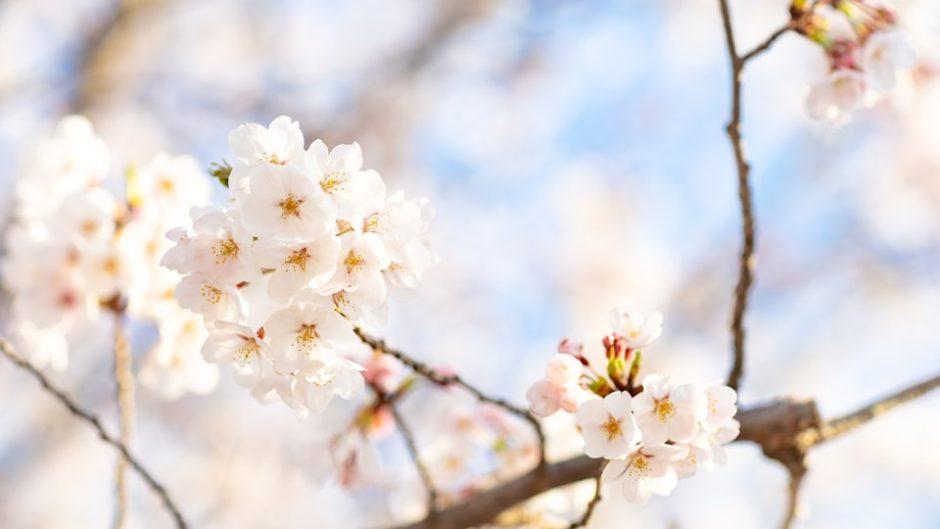 『土肥桜まつり』開催!1〜2月は土肥温泉でちょっと早めのお花見を堪能♡