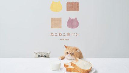 アンティークの「ねこねこ食パン」が2月17日(月)ついに名古屋栄にオープンします!!