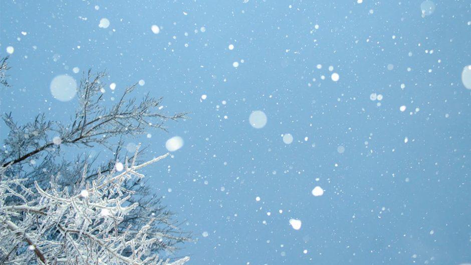 浜名湖ガーデンパークであそぼ♡『Winter Festa 2020 ゆきまつり』が開催!