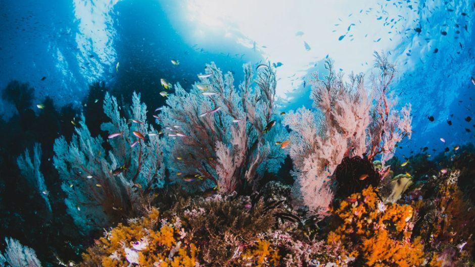海の花咲くリゾナーレ