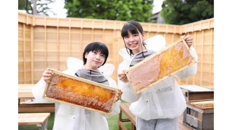 日本でここだけ!はちみつ採集体験ができるカフェであま〜いはちみつを楽しもう♪