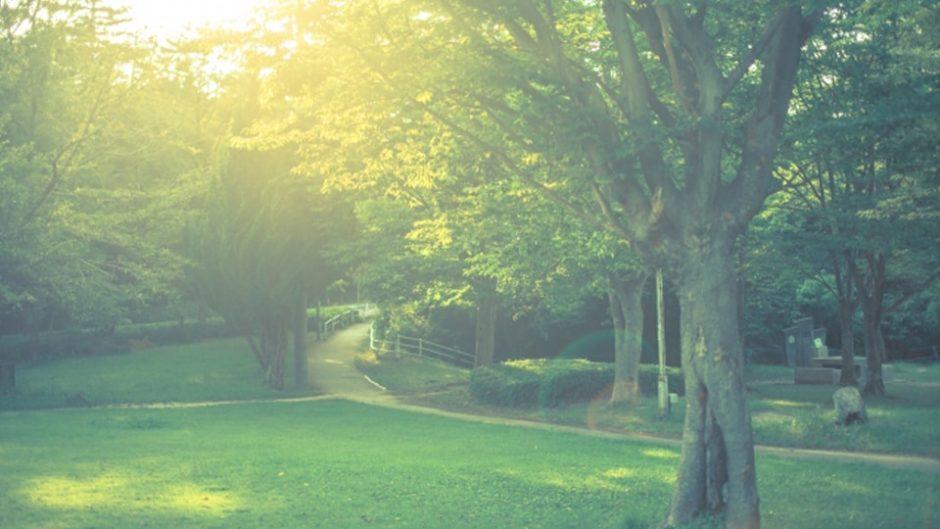 子どもの感受性や五感を育てる☆自然を体験・発見する「もりの学舎まつり2020」