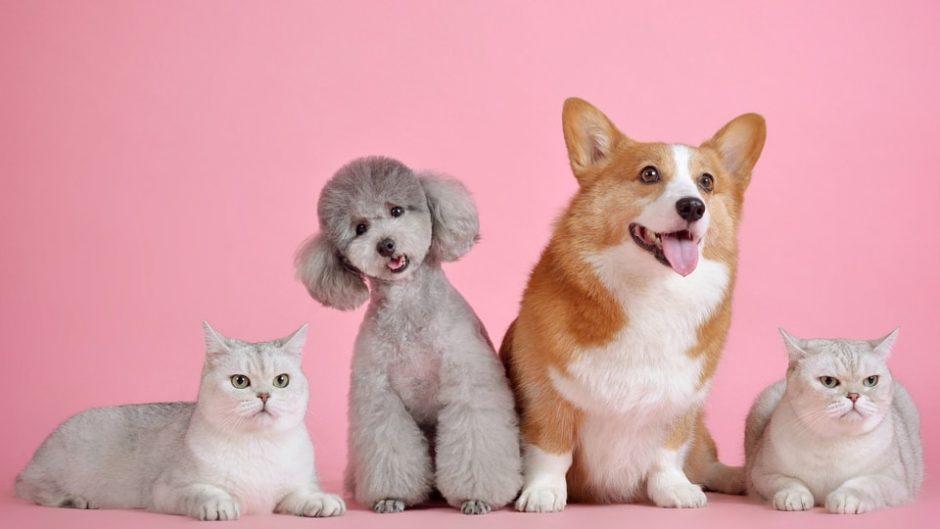静岡に初上陸!「Pet博2020静岡」5月2日~4日開催!