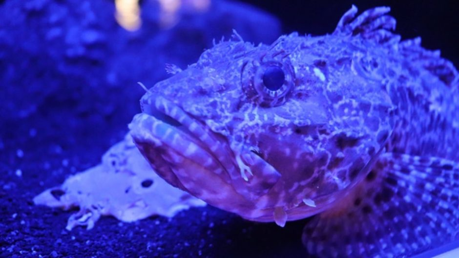 深海魚の魅力いっぱい♡『第2回 戸田深海魚フェスティバル』が「道の駅くるら戸田」で開催!