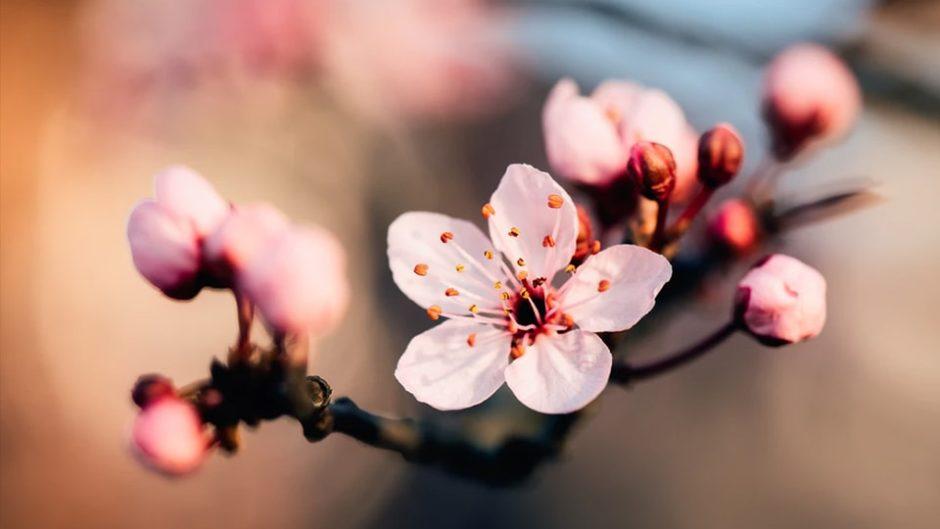 """「熱海城桜まつり」で""""最高の眺望&200本のソメイヨシノ""""を楽しもう♪庭園でのお花見は無料♡"""