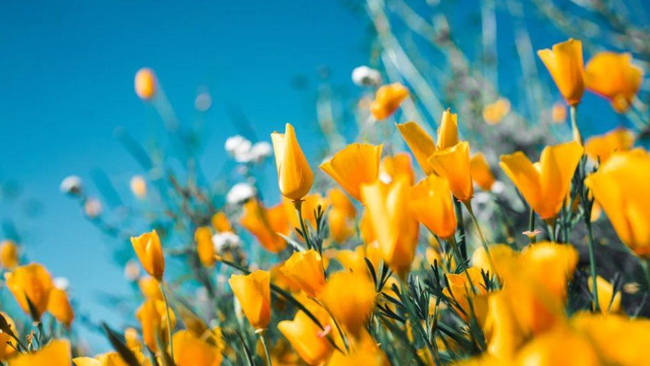 フラワーパーク江南で『春のガーデンパーティ』が開催!春の花を楽しもう!