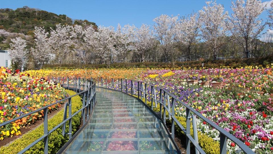 チューリップまつり in Flower Lagoon