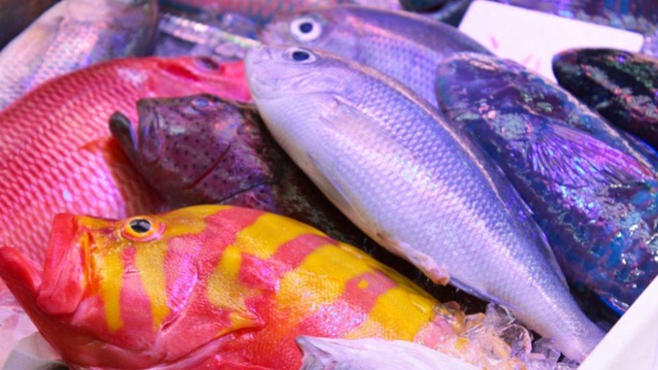 尾鷲の魅力を味わい、楽しむ!『おわせ お魚いちば おとと』をご紹介