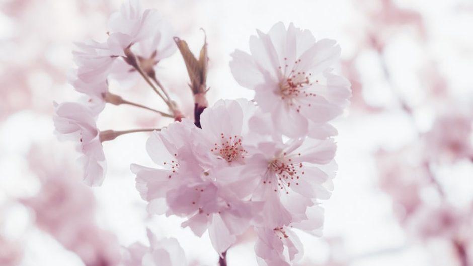 東海エリアお花見スポット