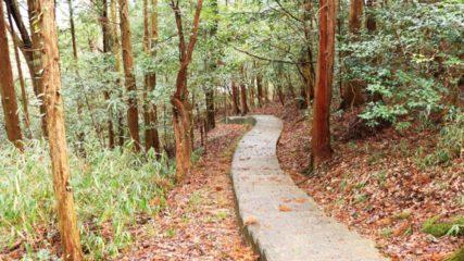 東海エリアで体験できるのはここだけ!「フォレストアドベンチャー・新城」で大自然を遊び尽くせ!