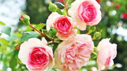 名古屋にいながらいろいろな花や緑と出会える!「久屋大通庭園フラリエ」