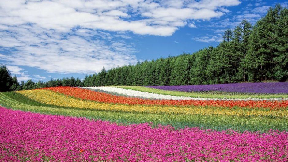 3〜6月まで四季折々の花が楽しめる♡『浜名湖花フェスタ2020』開催♪