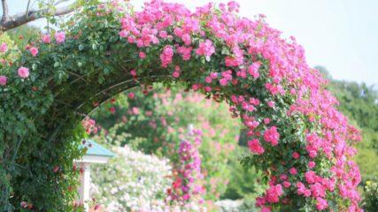 熱海の大人気観光地!『アカオ ハーブ&ローズガーデン』で相模湾×四季の花を堪能♡