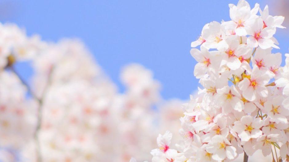 『法多山桜まつり』が法多山尊永寺で開催!桜とヤマツツジの競演にウットリ♡