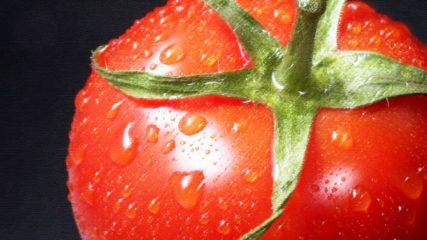 愛知・西尾市「King Farm(キングファーム)」でイチゴ狩り&完熟トマトを楽しんじゃお!!