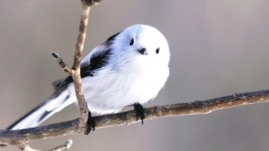 西武岡崎店で「ことりマルシェ」開催!小鳥グッズが大集合♪