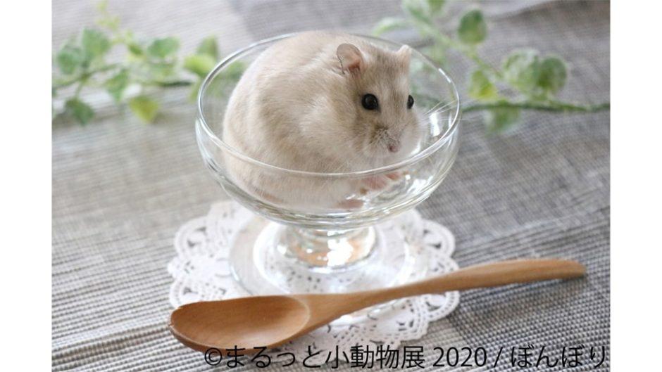 ハリネズミ・リス・フェレットも!「まるっと小動物展 2020 in 名古屋」