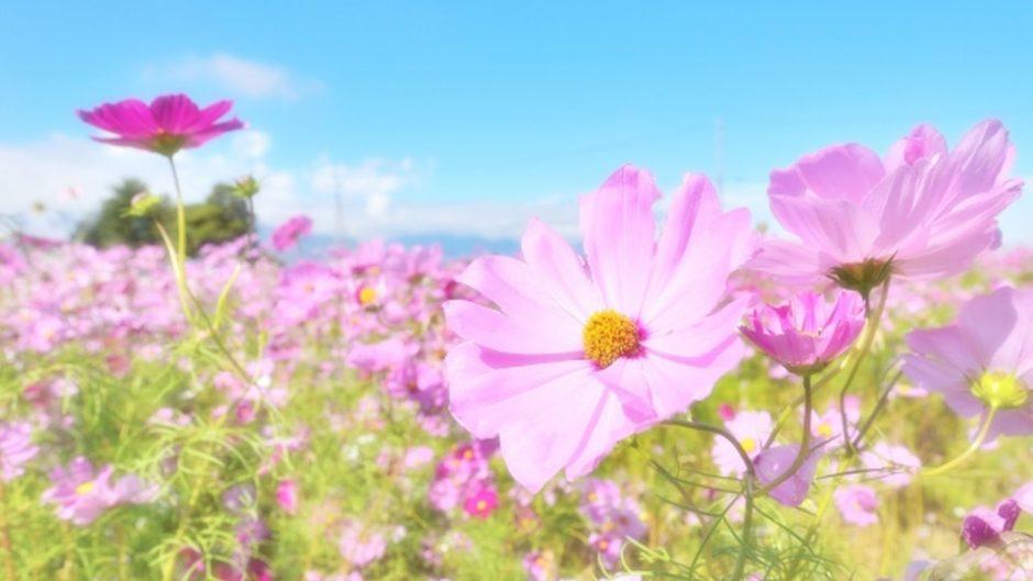 花に包まれる至福のひと時を過ごそう♡『なばなの里』の施設情報、アクセスをご紹介