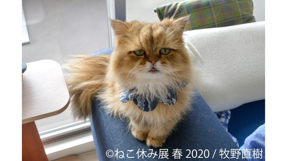 ねこ休み展 春 2020