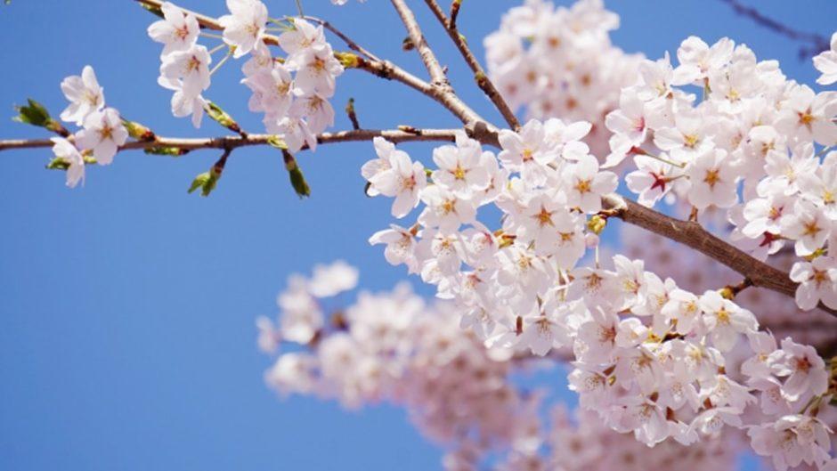 『つま恋リゾート 桜まつり』開催!野外イベントやアクティビティもいっぱい♡