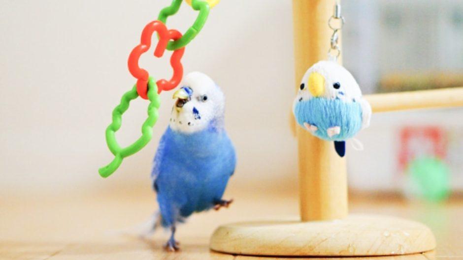 「鳥フェス名古屋」吹上ホールで2021年4月24日(土)・25日(日)に開催!