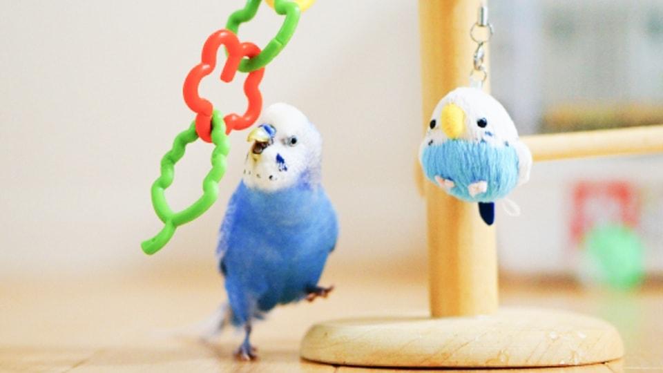 鳥フェス名古屋