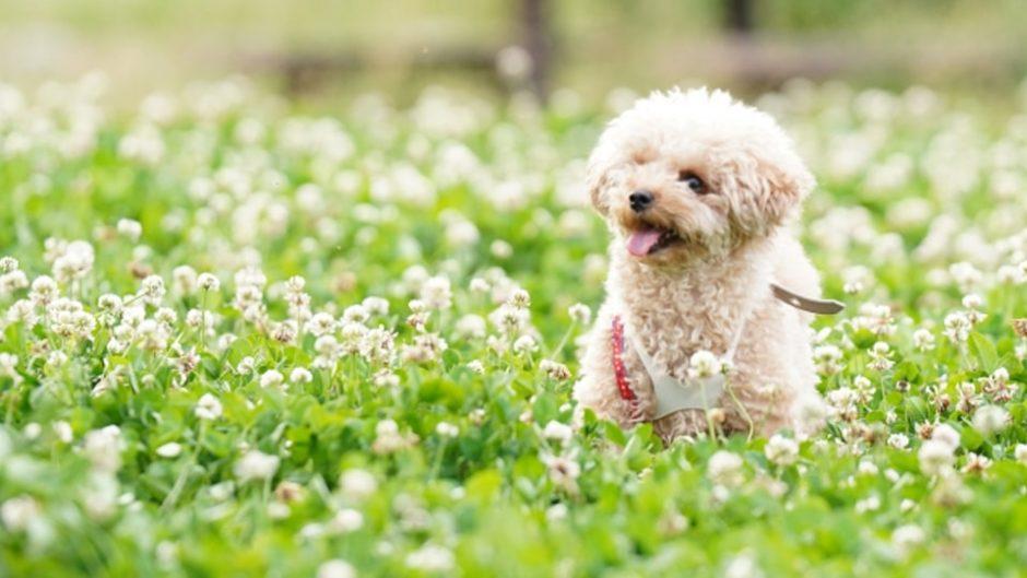 わんこの世界でも4年に一度のオリンピック!犬と人の為によるスポーツの祭典『わんマンピック2020』