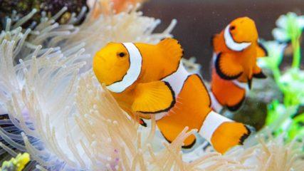 レゴモデルとのコラボ!体験型水族館「シーライフ名古屋(SEA LIFE Nagoya)」