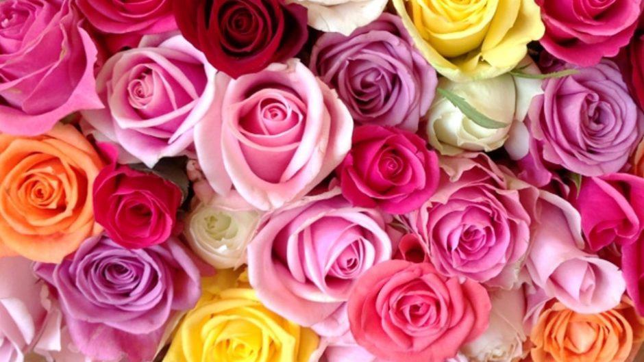 世界バラ会議で「優秀庭園賞」に輝いたガーデンで華やかなひと時を楽しみませんか?『熱海ローズフェスティバル2020』
