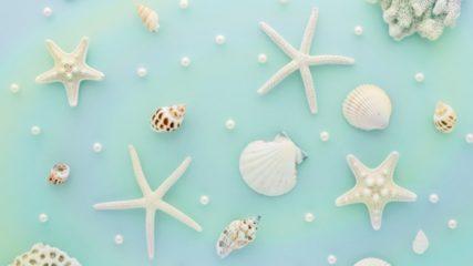 貝殻オブジェに囲まれた貝のテーマパーク「竹島ファンタジー館」をご紹介!