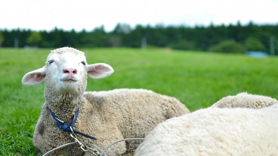 動物とのふれあいや貴重な体験ができる「四日市市ふれあい牧場」